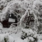 Schnee_IMG_7078