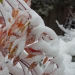 Schnee_IMG_7080
