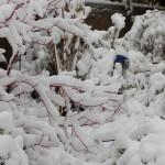 Schnee_IMG_7081