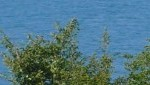 cropped-P1050644.jpg