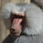 Zoo_IMG_5537