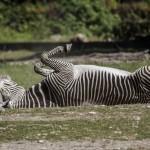 Zoo_IMG_5751