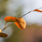Gartenbilder_IMG_7791