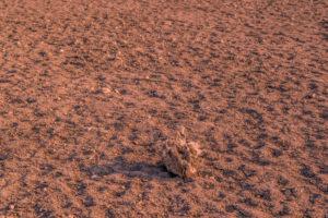 Rover entdeckt Überreste der Marsbewohner...