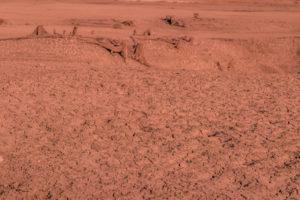 Endlich ein Zeichen von Leben: Marsechsen beim Staubbad.